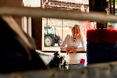 Mid adult woman looking at cow through window at dairy farm - p300m2199655 by Zeljko Dangubic