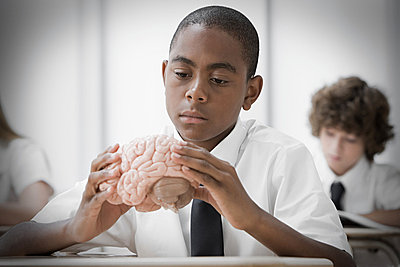 Boy with model of brain - p9246014f by Image Source