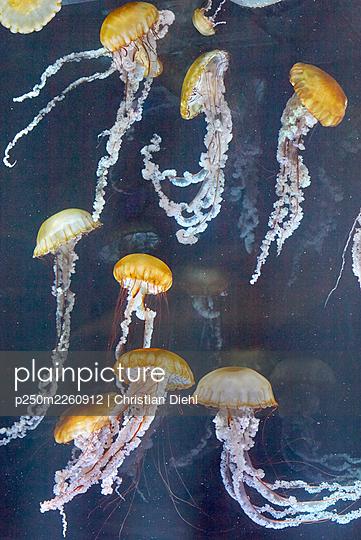 Jellyfish - p250m2260912 by Christian Diehl
