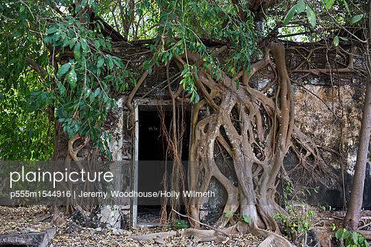 p555m1544916 von Jeremy Woodhouse/Holly Wilmeth