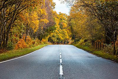 UK, Scotland, road in the highlands passing through orange and yellow trees - p300m2013259 von William Perugini