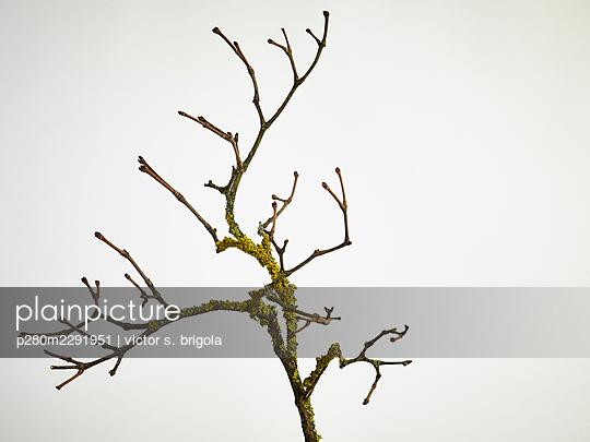 Twig - p280m2291951 by victor s. brigola