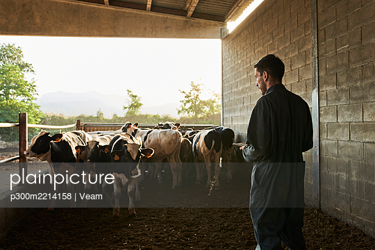 Farmer checking number of bulls and taking note on notebook at farm - p300m2214158 by Veam