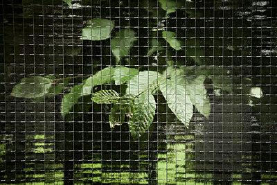 Hinter Glas - p1149m1057052 von Yvonne Röder