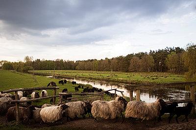 Niedersachsen - p1222m1362305 von Jérome Gerull