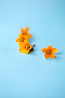 Delicate Yellow Flowers - p1248m2026307 by miguel sobreira
