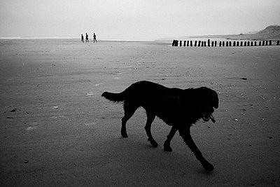 Hund am Meer - p1411m1477585 von Florent Drillon