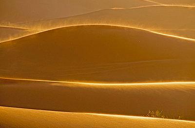 Africa;  Morocco;  View of Erg Chebbi dunes - p300m837055f by Walter G. Allgöwer