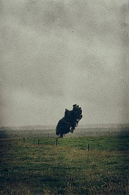 Schiefer Baum - p470m1539073 von Ingrid Michel