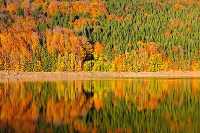 Germany, Bavaria, Lower Bavaria, Bavarian Forest, Nature reserve Obere Ilz, Ilz river in autumn - p300m1550167 by Martin Siepmann