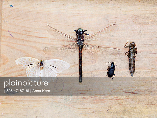 Insect collection on wooden background