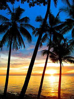 Palm trees on beach at sunset, Boracay, Aklan, Philippines - p343m2028869 by Per-Andre Hoffmann