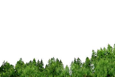 Baumwipfel - p450m1005288 von Hanka Steidle