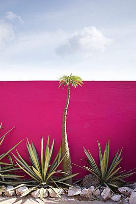 Palmenbeet - p606m885550 von Iris Friedrich