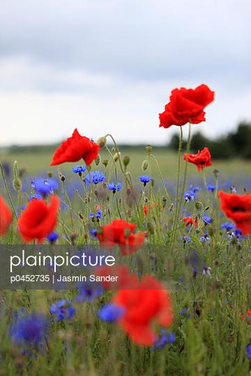 Mohn und Kornblumen - p0452735 von Jasmin Sander