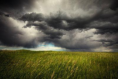 Crops on field against stormy clouds - p1166m1542349 by Cavan Social