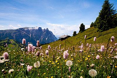 Bergpanorama Südtirol - p1386m1442145 von beesch