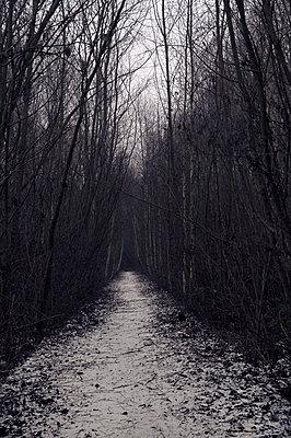 Verschneiter Weg - p470m2148479 von Ingrid Michel