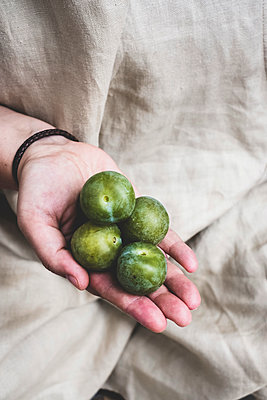 Close up of person holding fresh greengages. - p1100m2084890 by Mint Images