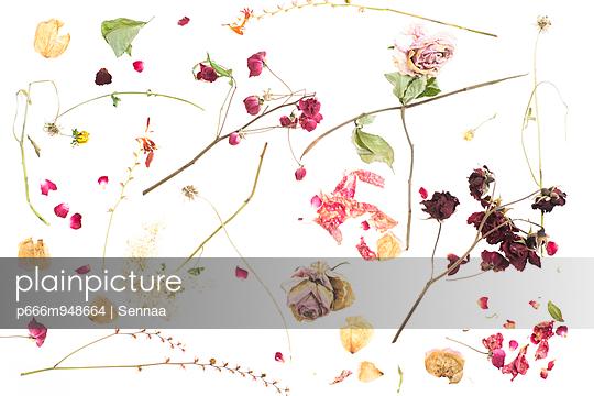 Trockenblumen - p666m948664 von Sennaa