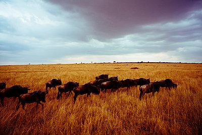 The Serengeti - p1002m833733 by christian plochacki