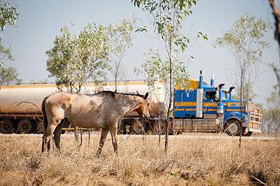 Pferd und Roadtrain - p1273m1110963 von Melanka Helms