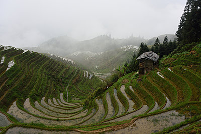 Rice Terrace - p523m1148677 by Lisa Kimmell