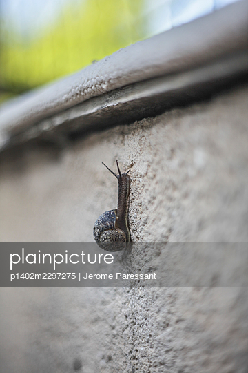 Snail on a wall - p1402m2297275 by Jerome Paressant