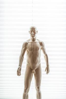 Anatomisches Modell - p1021m2020390 von MORA