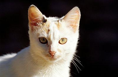 Weiße Katze - p2200077 von Kai Jabs