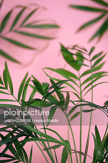 Palm fronds - p450m2259005 by Hanka Steidle