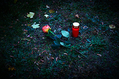 Single rose and grave candle on a cemetery at night - p1312m2193651 by Axel Killian