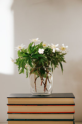 Vase with white flowers placed on stack of books - p1507m2177595 by Emma Grann