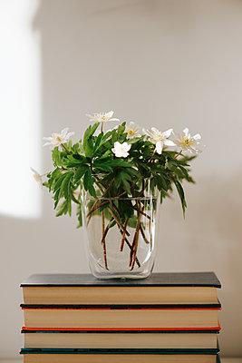 Vase mit weiß blühenden Blumen auf einem Bücherstapel - p1507m2177595 von Emma Grann