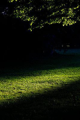 Park in evening light - p300m2213803 by Thomas Jäger