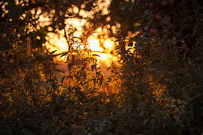 Sunset in Uckermark I - p941m907806 by lina gruen