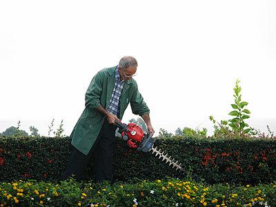 Mann arbeitet mit der Heckenschere - p972m1088578 von Felix Odell