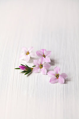 Small White and Pink Flowers - p1248m1573429 by miguel sobreira