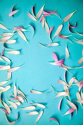 Loose petals  - p1248m2008570 by miguel sobreira