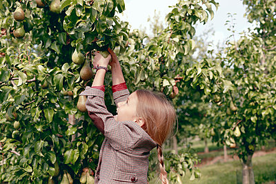 Curious girl picking pear fruit from tree in organic garden - p300m2276097 by Katharina Mikhrin