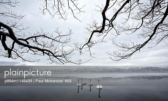p884m1145439 von Paul Mckenzie/ NIS