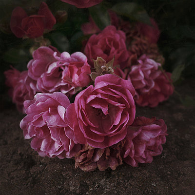 Bouquet - p1578m2150698 von Marcus Hammerschmitt