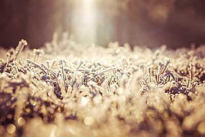 Frostige Waldwiese im Winter - p299m1208428 von Silke Heyer