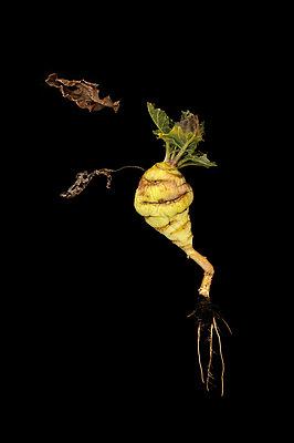 Stem cabbage - p470m830634 by Ingrid Michel