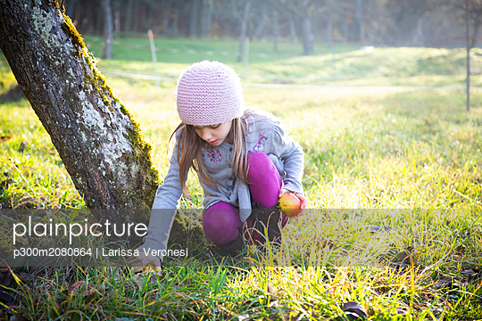 Girl collecting apples on a meadow in autumn - p300m2080864 by Larissa Veronesi