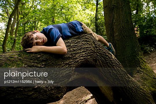 Junge liegt auf einem Ast - p1212m1152984 von harry + lidy