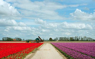 Tulips - p1132m1039967 by Mischa Keijser