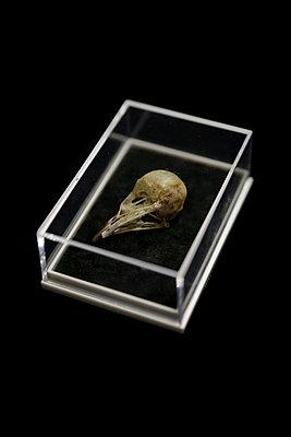 Bird skull - p1235m2056930 by Karoliina Norontaus