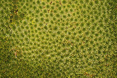 Pflanzenwelt - p1259m1072276 von J.-P. Westermann
