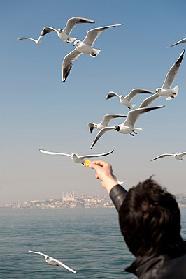 A man feeding seagulls, rear view, Istanbul, Turkey in background - p301m799862f by Mark Gerum